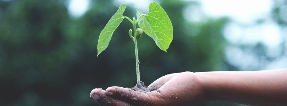Je bedrijf laten groeien en bloeien Zo doe je dat! - Nieuws - Blogs - Sanacount